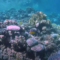 Doing Your Bit: Cleaning up coral reefs in the Red Sea